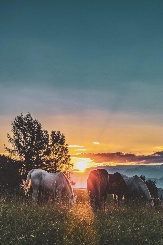 Utbildning: kiropraktik för hästar